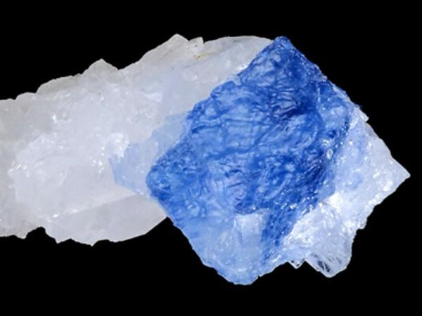 blauwe haliet