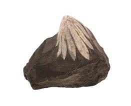 chrysant steen met werking en uitleg. Kopen in de webshop.