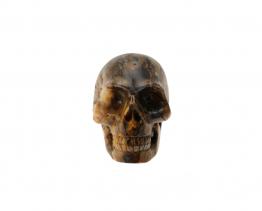 Pietersiet schedel