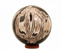 versteend hout bol